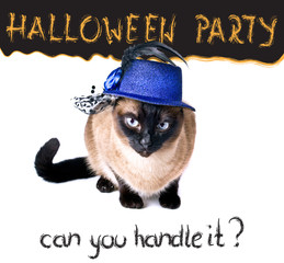 Halloween party banner funny edgy jumpy Siamese Cat