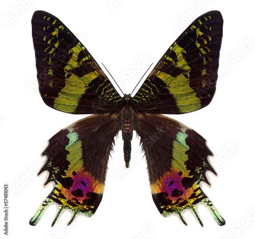 Aluminium Fyle beautiful butterfly isolated on white