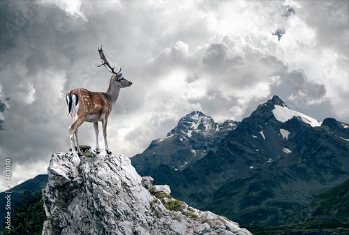 Fotobehang Ree Lonely Deer