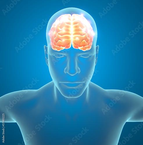 Cervello neuroni sinapsi funzioni
