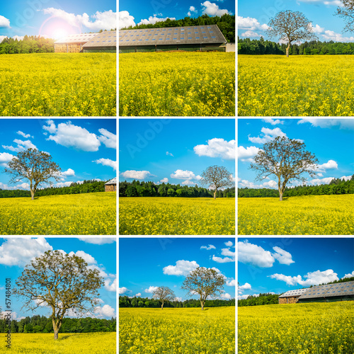 Yellow field collage