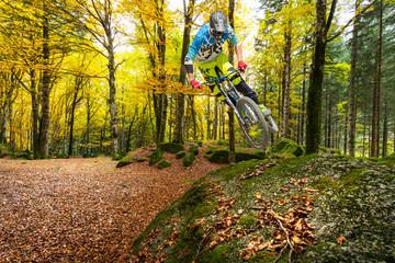 autumn freestyle