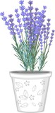 Lavender flowers in flowerpot