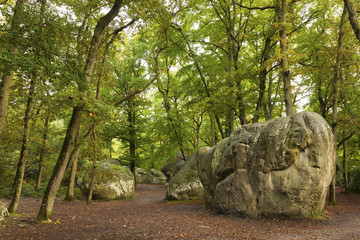 Forest of Fontainebleau, Seine-et-marne, Ile de France, France