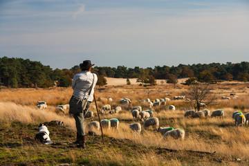 shepherd and dog overlooking their herd