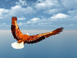 canvas print picture - Sea Eagle