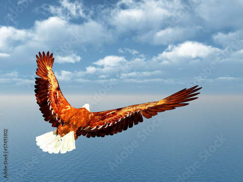 canvas print picture Sea Eagle