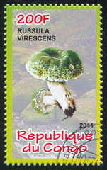 Russule greenish