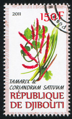 Tamarix and Coriander