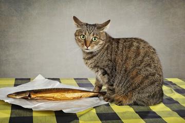 chat volant poisson sur table de cuisine