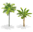 Coconut palm and banana tree. Vector illustration.