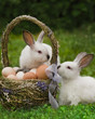 Easter basket with eggs and the Easter bunny