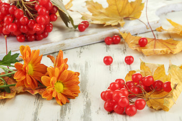 Red berries of viburnum with yellow leaves and flowers