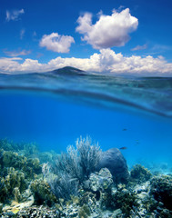 Coral reef with cloudy blue sky horizon split