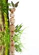 composition aquatique, bambou, galets, papillon