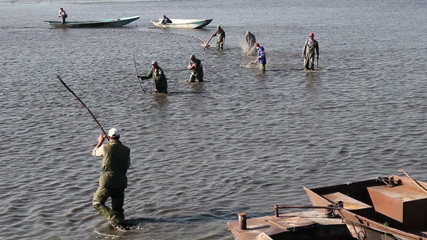 Teamwork of Fishermen Harvesting Pond