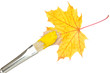 Painting a autumnal yellow leaf