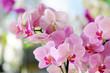 Obrazy na płótnie, fototapety, zdjęcia, fotoobrazy drukowane : pink orchid