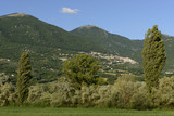 windy trees  in green countryside near Poggio Bustone, Rieti val