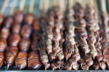 Chinese street food - roasted silkworm pupae and grasshoppers