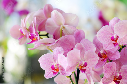 Fotobehang Orchidee pink orchid