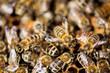 Bees Swarming