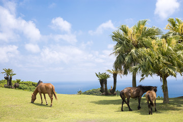 都井岬の海辺の馬たち