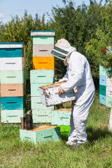 Male Beekeeper Carrying Honeycomb Crate
