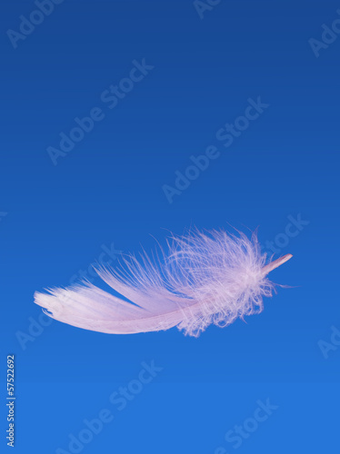 Floating fluffy feather - weightless, light