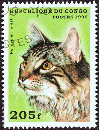 Norwegian Forest cat (Congo 1996)