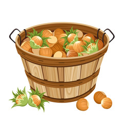Basket with hazelnuts. Vector illustration.
