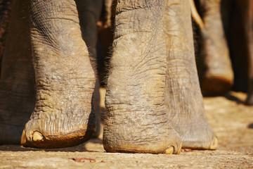 Elephant legs