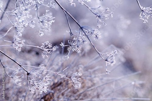 canvas print picture Winter floral background