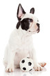 French bulldog puppy with toy  ball over white