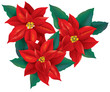 Red Poinsettia christmas flower