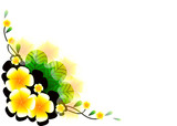 frangipani vector background