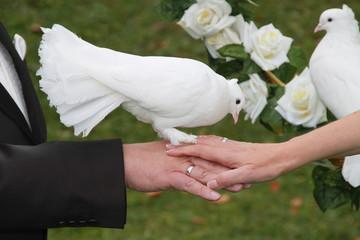 Hand in Hand: Brautpaar mit weißer Taube auf der Hand