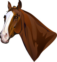 horse head turning looks