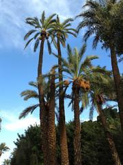 palm tree