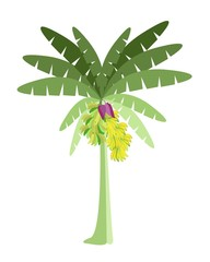 Banana Tree with Bananas and Blossom