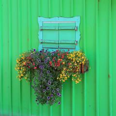Blumenfenster auf grüner Bretterwand