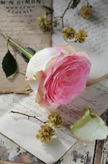 Rose auf Briefen