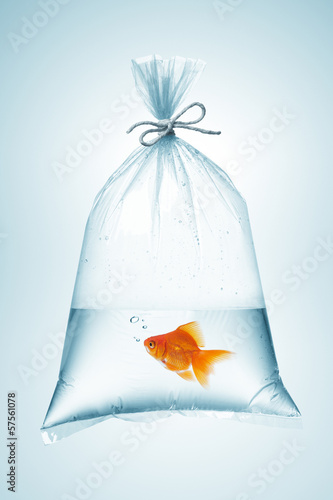 goldfish in bag