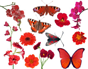 set of red color flowers and butterflies isolated on white