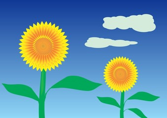 Sunflowers in the fiield