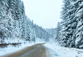 Winter country road with fir forest (overcast day).