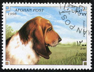 stamp printed in Afghanistan shows Dog, basset hound
