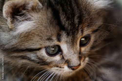 Fototapeten,portrait,hübsch,katzenbaby,katze