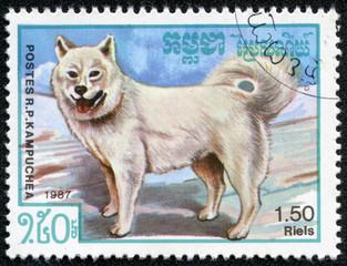 stamp printed by Cambodia, shows Samoyed dog