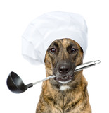dog in chef's hat holding ladle in mouth. isolated on white